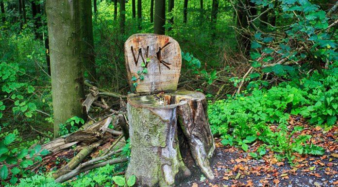 Boomstronk in het bos als wc.