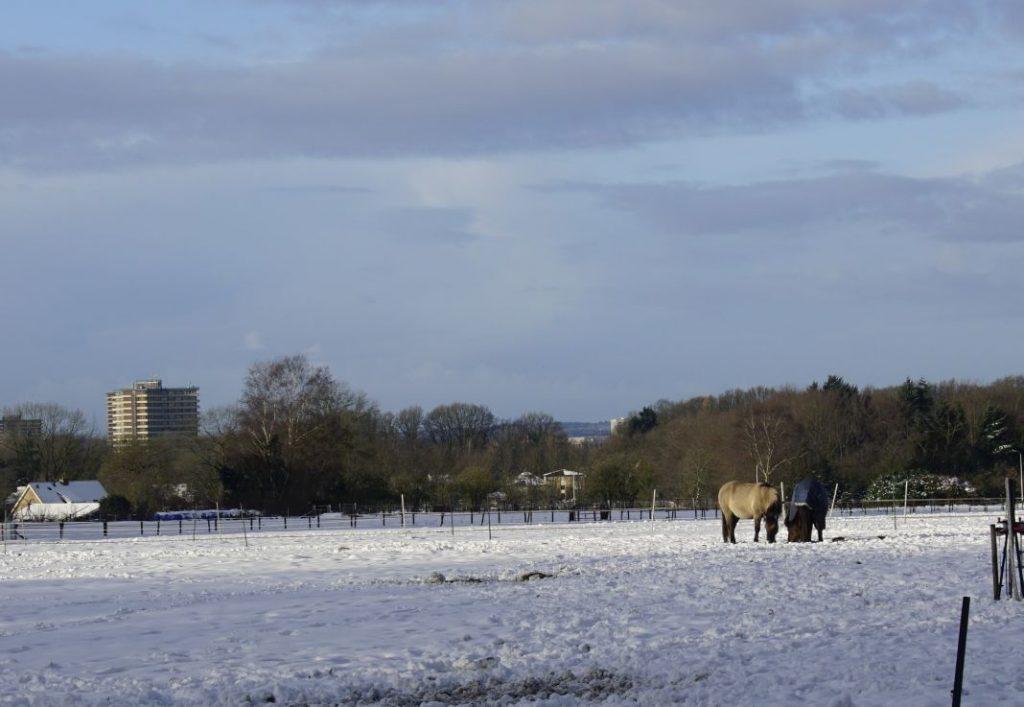 Zicht op Wageningen en twee ponies in De Eng.