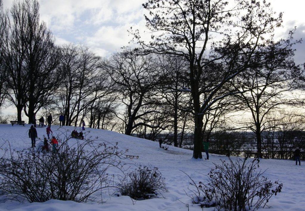 Sneeuwpret in het Belmonte Arboretum Wageningen.