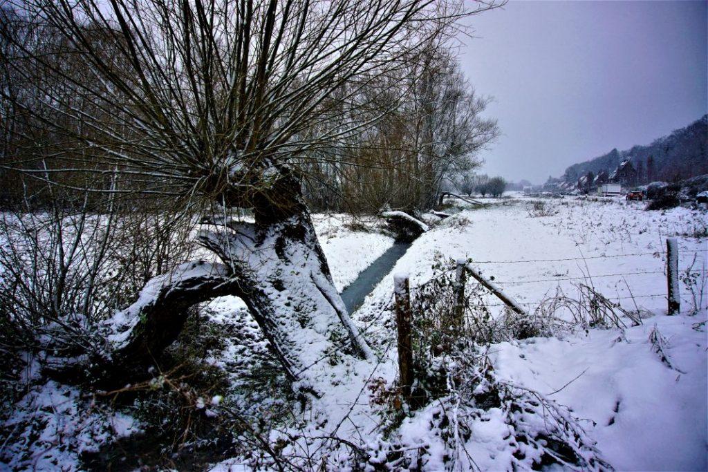 Gebogen bomen in de Uiterwaarden van Wageningen.